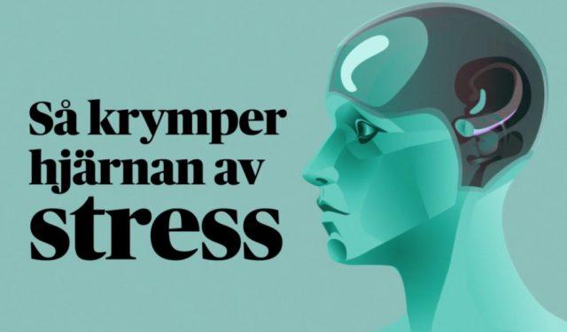 Hjärnan krymper vid stress – bokstavligen